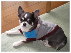 犬服 - フードパーカー(ブルー×グレー)