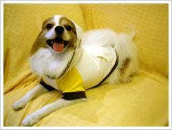 犬服 - フードパーカー(イエロー×オフホワイト)