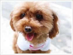 犬服 - ボーダーニット(ピンク×ホワイト)