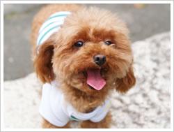 犬服 - ボーダーニット(イングリッシュグリーン×ホワイト)