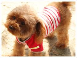 犬服イメージ