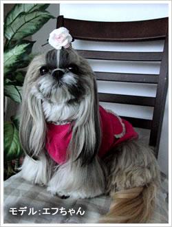 犬服 - 天竺ドット(レッド)